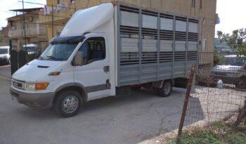 Iveco Daily 35c13 trasporto animali vivi  2001 pieno